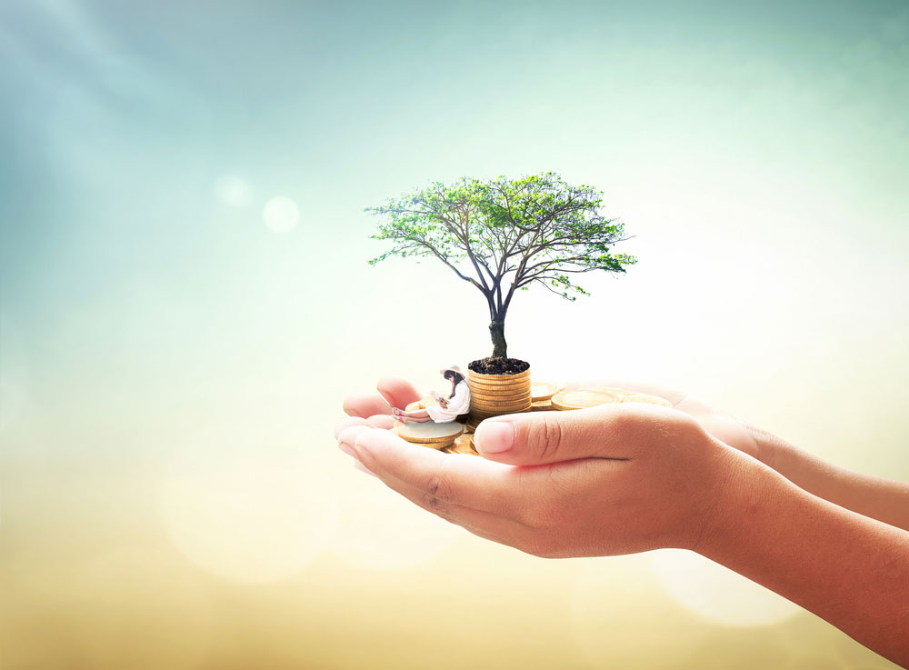 Tree in the palm of someone's hands to signify growth