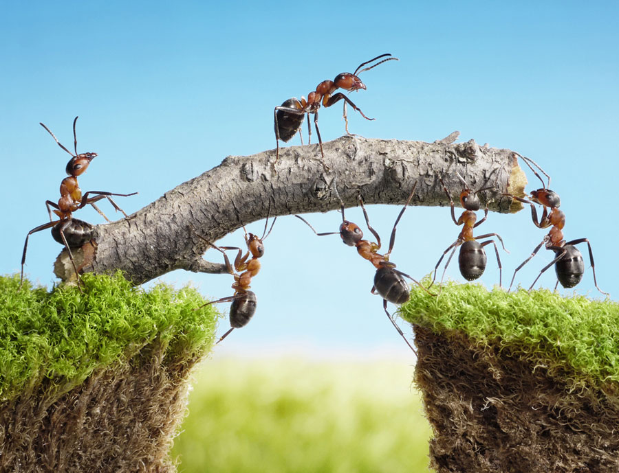 Ants discover a new route to overcome their challenge